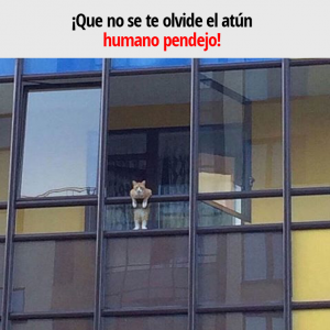 ¡Que no se te olvide el atún humano pendejo!