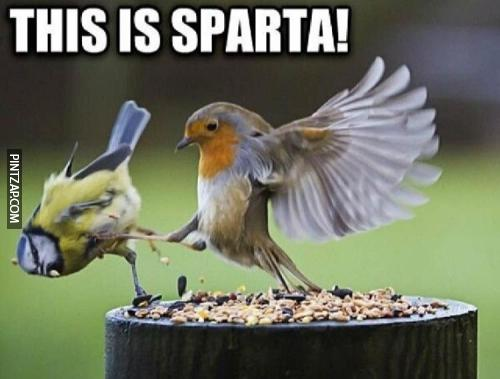 This is Sparta